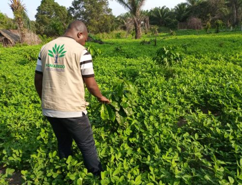 Le PIREDD Sud-Ubangi vers la sédentarisation des agriculteurs